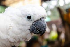 Witte aravogel rond met natuurlijke achtergrond stock afbeelding