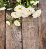 Witte asterbloemen Royalty-vrije Stock Afbeelding