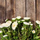 Witte asterbloemen Royalty-vrije Stock Foto's