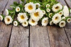 Witte asterbloemen Stock Afbeelding