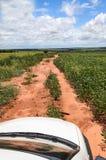 Witte auto bij de landweg amid landbouwbedrijven met sojaboonaanplanting royalty-vrije stock afbeelding