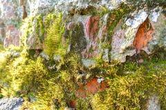 Witte bakstenen muur Ruw metselwerk Mos, korstmos bij de bodem van de muur Van Achtergrond grunge textuur stock foto's