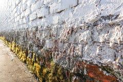 Witte bakstenen muur Ruw metselwerk Mos, korstmos bij de bodem van de muur Van Achtergrond grunge textuur royalty-vrije stock fotografie