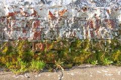 Witte bakstenen muur Ruw metselwerk Mos, korstmos bij de bodem van de muur Van Achtergrond grunge textuur stock afbeelding