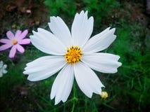 Witte beauty' s royalty-vrije stock foto's