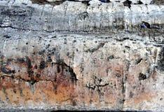 Witte berk - ruwe schors en boomstam van berk als interessante textuur stock afbeeldingen