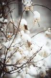 Witte bessen Stock Foto's