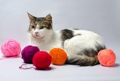 Witte bevlekte pluizige kat onder multi-colored ballen van wolgaren stock foto