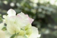 Witte bladeren Royalty-vrije Stock Fotografie
