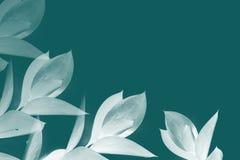 Witte bladeren op takjes Royalty-vrije Stock Fotografie
