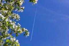 Witte bloeiende appelbomen royalty-vrije stock afbeeldingen