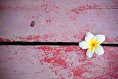 Witte bloem. Stock Afbeeldingen