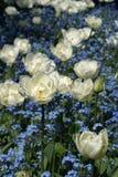 Witte Bloem Royalty-vrije Stock Foto