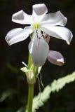 Witte bloem Stock Fotografie