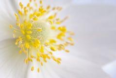Witte bloem, close-up Royalty-vrije Stock Foto's