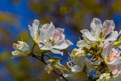 Witte bloem die in de zomer bloeien stock fotografie