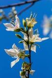 Witte bloem die in de zomer bloeien Stock Foto's