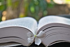 Witte bloem die in het midden van een boek wordt gehouden stock fotografie
