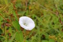 Witte bloem en groene bladeren stock fotografie