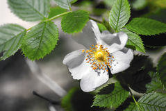 Witte bloem en groene bladerensamenstelling royalty-vrije stock afbeeldingen
