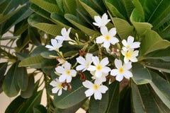 Witte bloem en installatie Stock Afbeelding