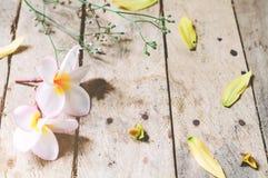 Witte bloem Frangipani Stock Afbeeldingen