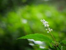 Witte Bloem in Groen bos Stock Afbeeldingen