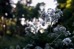 Witte bloem in het hout stock afbeeldingen