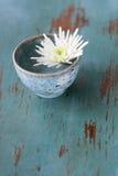 Witte bloem in kleine kop Royalty-vrije Stock Foto