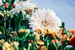 Witte bloem macroindia Royalty-vrije Stock Foto