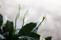 Witte bloem met groene bladeren Stock Afbeeldingen
