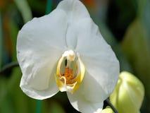 Witte bloem 2018 Mooi royalty-vrije stock afbeeldingen