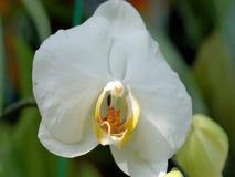 Witte bloem mooie bloemeninstallatie in de tuin stock fotografie