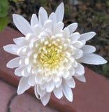 Witte bloem 1 royalty-vrije stock foto's