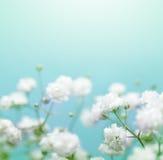 Witte bloem op blauwe achtergrond Royalty-vrije Stock Foto's