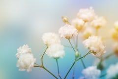 Witte bloem op blauwe achtergrond Royalty-vrije Stock Fotografie
