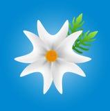 Witte bloem op blauwe achtergrond, bloemvector Stock Afbeeldingen