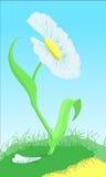 Witte bloem op de groene lening Royalty-vrije Stock Afbeelding