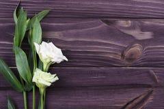 Witte bloem op een donkere houten achtergrond De dag van de valentijnskaart De kaart van de groet Royalty-vrije Stock Afbeelding