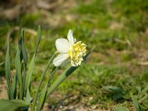 Witte bloem op groene achtergrond stock foto's
