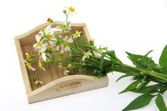 Witte bloem op houten dienblad Stock Afbeeldingen