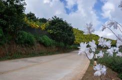 Witte bloem opzij straat Stock Foto