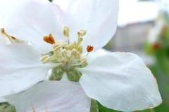 Witte bloem van een boom macroschot stock fotografie