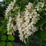 Witte bloem zoals een Dame Slipper Stock Afbeelding