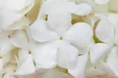 Witte bloemachtergrond Royalty-vrije Stock Foto's