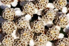 Witte bloemachtergrond Stock Foto