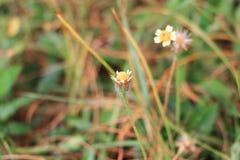 Witte bloembloei klein op de boom Royalty-vrije Stock Fotografie
