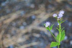 Witte bloembloei klein op de boom Stock Foto's