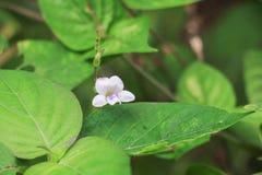 witte bloembloei klein op de gras mooie samenvatting backgr Stock Foto's