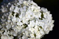 Witte bloemclose-up Stock Fotografie